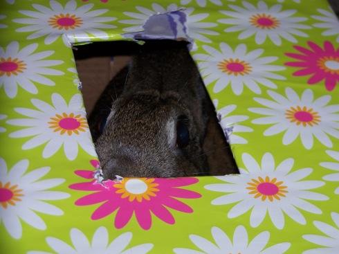 Eppy Box