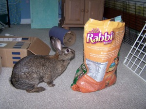 You really were smaller than your food bag when you came home with me.