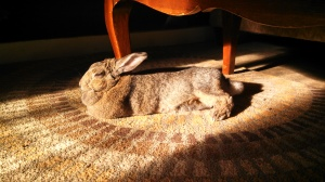 But inside was OK too if there was a sunbeam to sleep in.