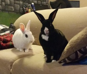 They stared back. And then demanded treats. Because rabbits don't find requests for assistance to be awkward.